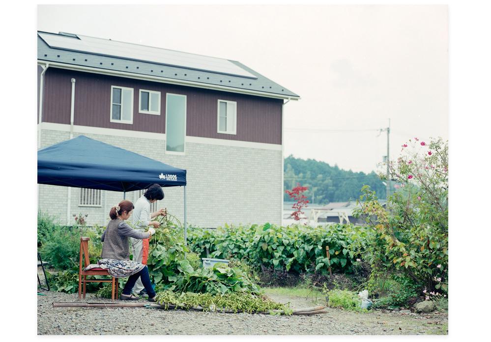 20111011_丹波篠山黒豆を穫る03