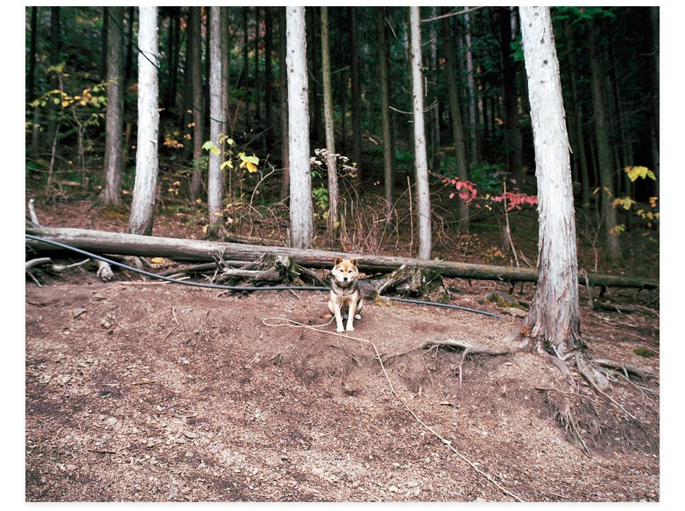 20111214_犬のきもち
