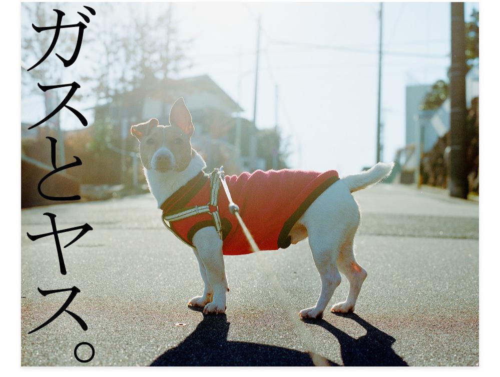 20120303_ガスとヤス