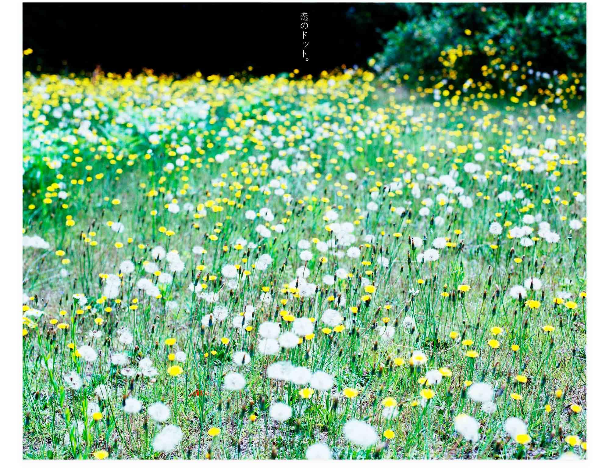 20120713_恋のドット