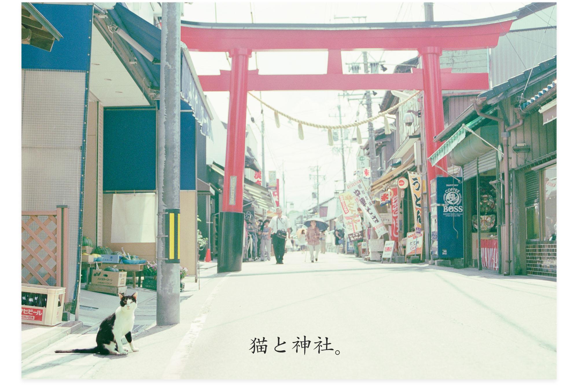 20130820c_猫と神社b
