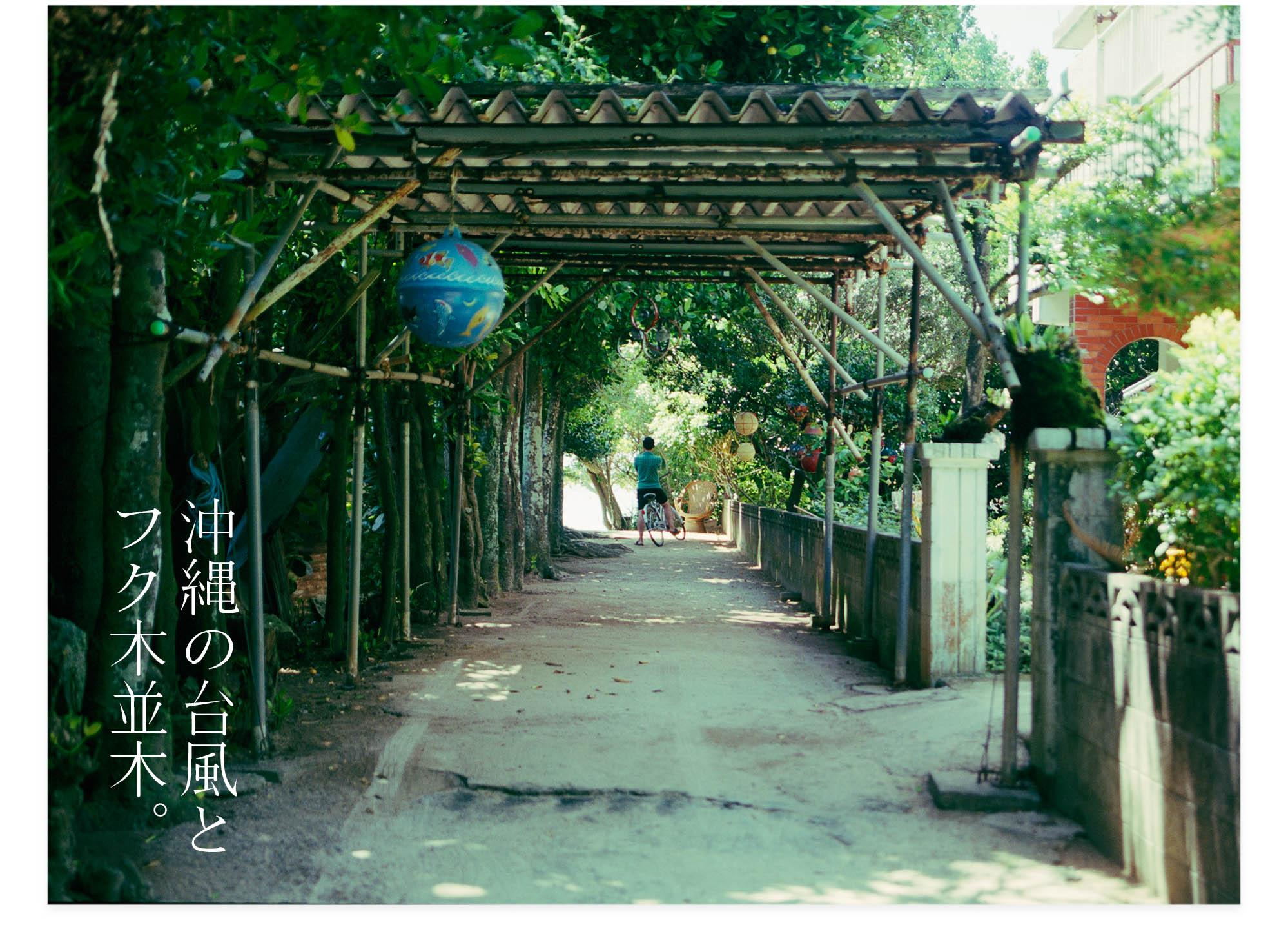 201301008_沖縄の台風とフク木並木